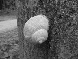 Schneke am Baum