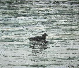Blässhuhn auf dem Untersee, Öl auf Leinwand, 12 x 14 cm