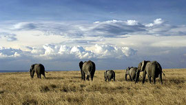 Parco Nazionale Amboseli.