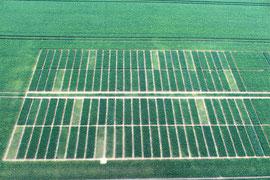 Drohne in der Landwirtschaft - Luftbilder Mecklenburg-Vorpommern