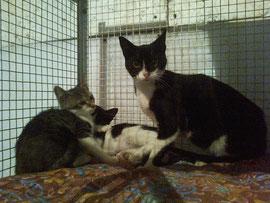 Sofia con i due cuginetti