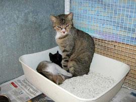 La mamma con due piccolini