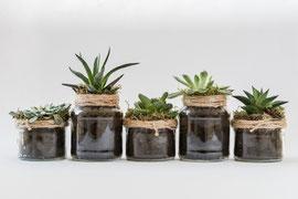 Pflanzen als Raumtrenner