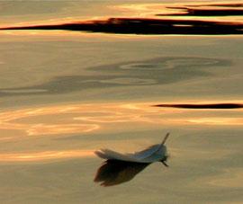 Feder auf goldenem Wasser