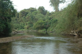 Gallery forest on a riverbank in Attapu Province Laos