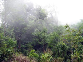 Highland evergreen mist forest in Chiang Mai Province Thailand