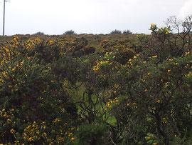 Caradon Hill / Bodmin Moor