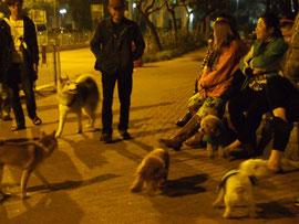 愛犬家たちの夜の集会
