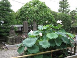 ハス池と石仏