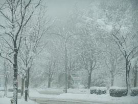 重い雪…春の雪のような