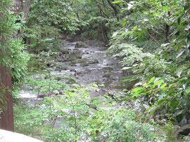 川の湯「まる」から眺める清流