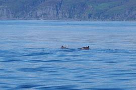 Delfine vor Seil