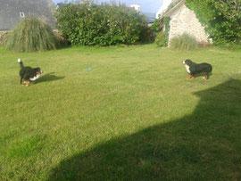 Chicco und Yumak im Garten°