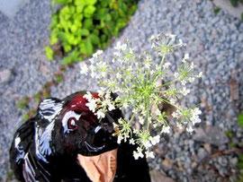 おなじみの花ですわ