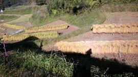 かけ干し米 なかはた農園