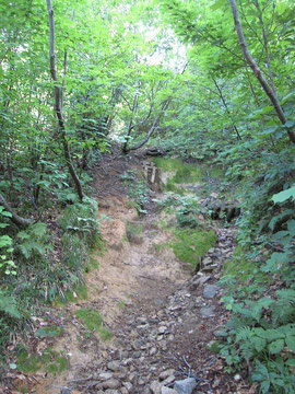 オツボ峰~大鳥池途中の樹林帯の急登