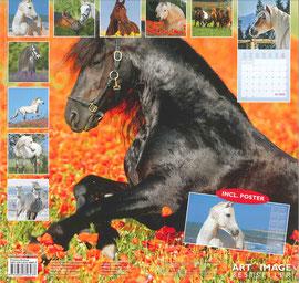 """Agelan im Kalender """"Horses 2013"""" mit einem Bild von Christiane Slawik!"""