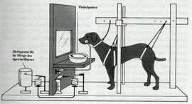 Experiment: Pawlowscher Hund