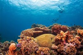 Great Barrier Reef, Tropical North Queensland