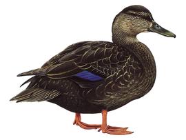 http://www.birdguides.com