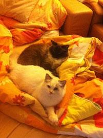 Amy und Ihr neuer Bruder Gismo