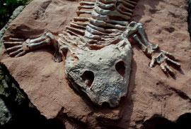 Symiosaurus Detail