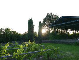 Fruchtbarer Boden und rundum Sonne