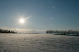 2月 雪原とからまつ防風林