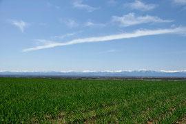 5月 日高山脈と小麦畑