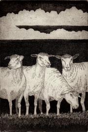 Schafe auf dem Deich  (10x15)