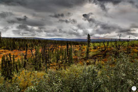 "Bild: trees at Dalton Highway, Alaska, ""a kind of desert"";V2.1; www.2u-pictureworld.de"