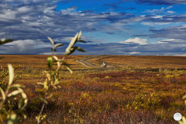 "Bild: tundra and truck on Dalton Highway, Alaska, ""on the way up to the North""; www.2u-pictureworld.de"