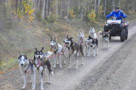 hunde am tränieren ganz früh  morgens
