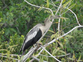 Ausflug in die Everglades