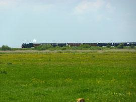 le train touristique traverse les pré-salés