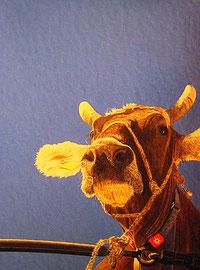 Schau die Viehschau
