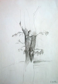 1996. Бумага, карандаш. 30 х 21