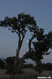 Mondschein - wie romantisch