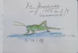 Heuschrecke - in Weissenried VS auf 1706 m