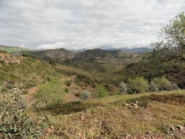 Liebliche Hügellandschaft