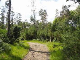 Zas - Camino Real