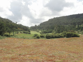 Area de Lourido