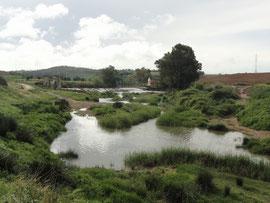 Am Rio Guadaira
