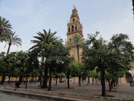 Córdoba - Blick auf Kathedrale vom Garten des Palastes der christlichen Könige aus