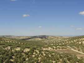 Torredelcampo