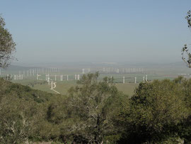 Acebuchal Windenergiepark