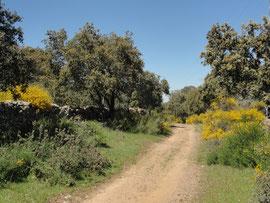 Bodonal de la Sierra - Vereda de Jerez a Bodonal