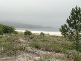 Finisterre Praia Langosteira