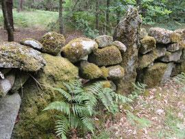 Wald vor Ponte Mandras