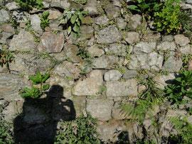 Mauer in Caldas de Reyes
